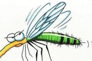Tovább gyérítik a szúnyogokat