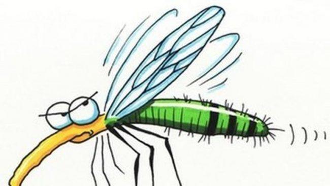 Elkezdődött a szúnyogok tenyészőhelyeinek feltérképezése