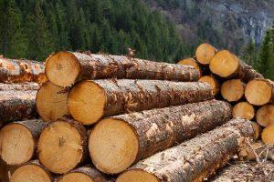 Az illegális fakitermelés és fakereskedelem visszaszorítása