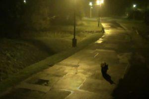 Videón az utcán sétáló medve